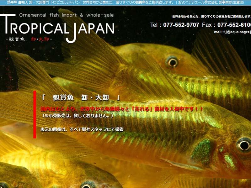 滋賀 栗東 熱帯魚販売のネットショップ・ホームページ制作イメージ